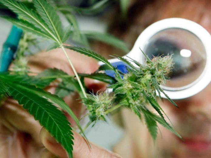 Курганская область конопля как растить марихуаны